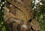 Location vacances Cáceres - Jaguar House Boat - Pantanal-4
