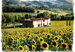 Location vacances Paciano - Fontegirasole-4