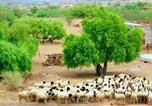 Location vacances Jaisalmer - Javand Royal Desert Safari-2