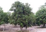 Hôtel Ban Rai - Mango Garden Guesthouse-4