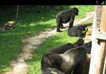 Camping Gisenyi - The Gorilla Resort-2