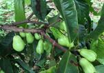 Hôtel Naalehu - Hawaii Belt Coffee Garden-4