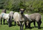 Hôtel Bronwydd - Cefnllech-Clawdd Farm B & B-2