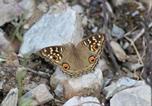 Camping Nainital - Nature Drops-4