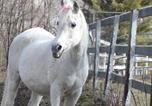 Hôtel Concord - Arabian Horse Inn (Inn on the Horse Farm)-2
